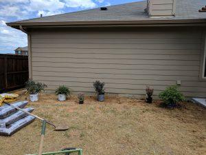 New Backyard Garden
