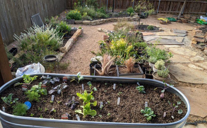 DIY Stock Tank Gardens Part 1