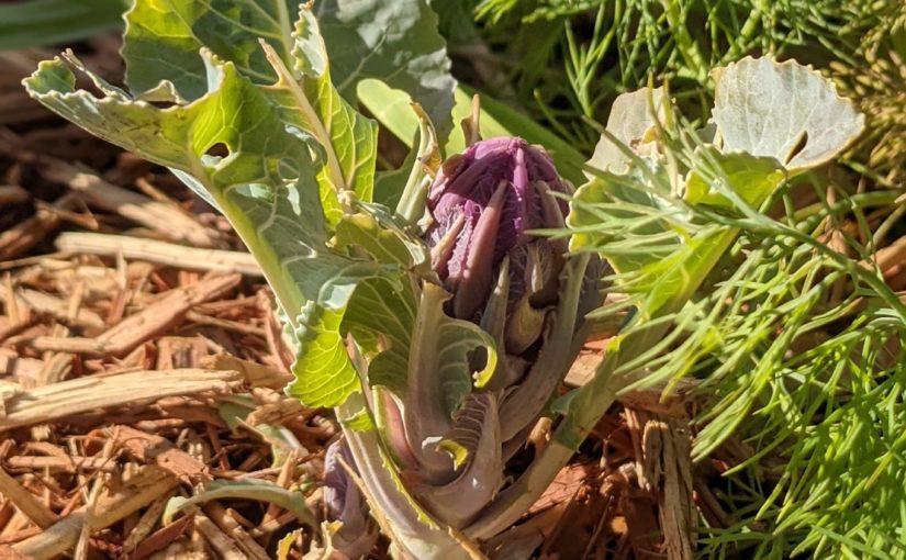 Stock Tank Vegetable Garden Update
